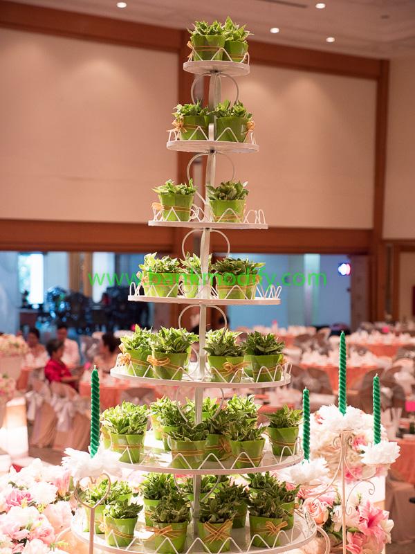 ต้นไม้ที่ใช้ในการรดน้ำ แทนการตัดเค้กงานแต่งงาน